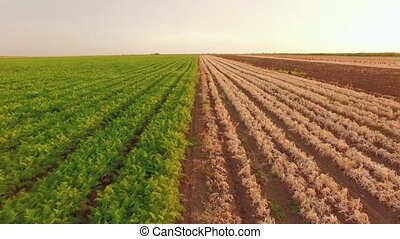 Vegetable Fields On Rural Farmland - AERIAL VIEW. Flight...