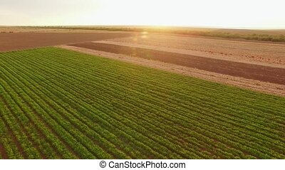 Agricultural Landscape With Green Field - AERIAL VIEW Flight...