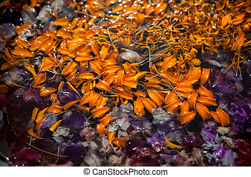 colored leaves with drops of dew in the water - leaves with...