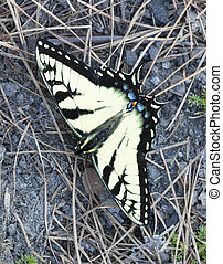 Colorful insect - Large yellow butterfly on the ground with...