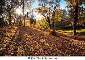 Autumn Cemetery - Hillside cemetery with long shadows and...