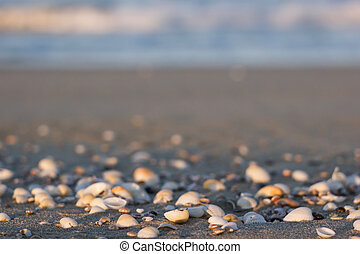 eashells on a sandy beach in the sun at sunset