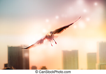 Motion Blur of Dove fly in the air with wings wide