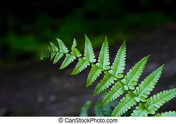 A Fern - Ferns are members of the phylum Pterophyta....