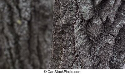 Brown bark on a tree and branches.