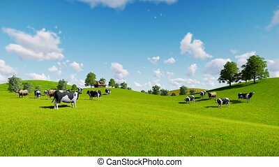 Herd of cows on green meadows - Springtime rural scenery...