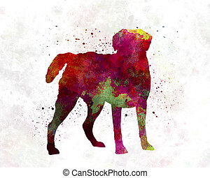 Chesapeake Bay Retriever in watercolor