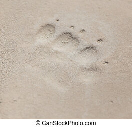 footprint of an animal in clay