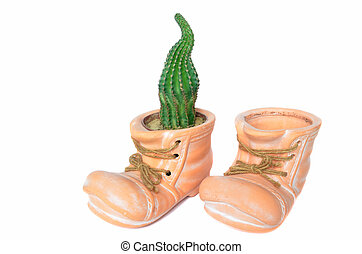 Cactus planted in flower pot which looks like boot