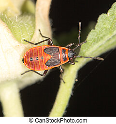 red beetle in nature close-up