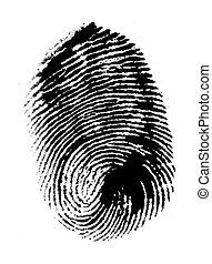 Thumbprint - Close up of Thumb print