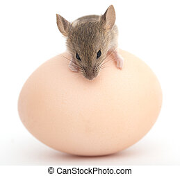 mouse and egg on a white background