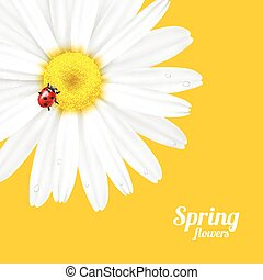 Spring flower and ladybug - Bright spring background design...