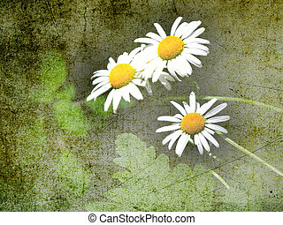 Artsy daisies - Grunge look for daisies on green background