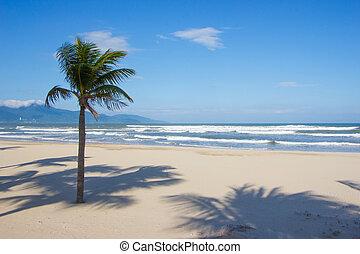 Single palm tree on tropical beach