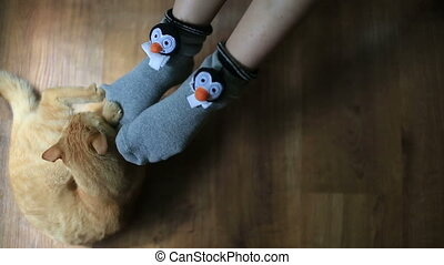 Cute red cat plays with girl in funny socks close up.