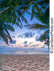 Coconut tree on the beach at sunset - Coconut trees on the...