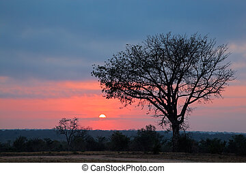 African savanna sunrise - Silhouetted African savanna tree...