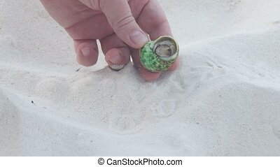 The man took his fingers a small hermit crab, Thailand,...