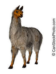Llama or Lama on White - Llama or Lama glama, a domesticated...