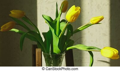 Faded yellow tulip buds raised