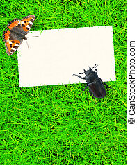 Spring message - Sheet to a paper on a green grass