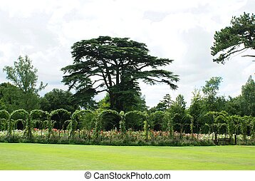 Blenheim Palace Rose Garden,England - Blenheim Palace Rose...