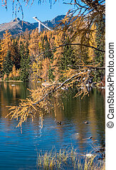 Autumn at Strbske Pleso, Slovakia - Autumn at tarn Strbske...