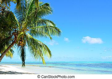 A tropical palm tree beach