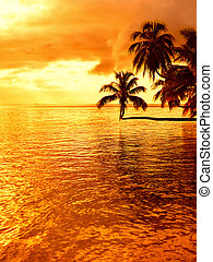 Tropical coconut palm tree sunset
