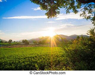 ocaso, encima, verde, campos