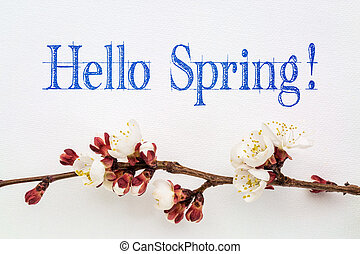 Hello spring with apricot flower