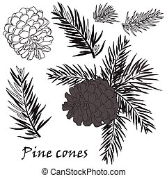 Fir tree branches with pine cone on white background - Fir...