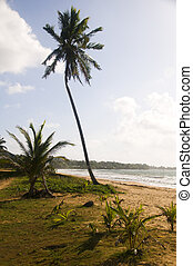 coconut tree desolate beach long bag corn island nicaragua -...