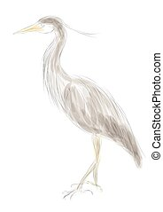 grey heron isolated on a white background