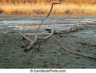 Driftwood in dry Lake
