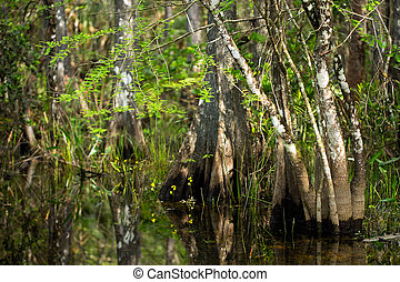 Wildflowers and Cypress Trunks in Florida Swamp