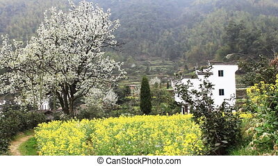 wuyuan31.mov - beautiful old village in China