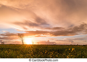 Panoramic view of a flowering yellow daisy flowers on a...