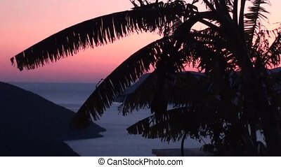 Palms and bay at twilight zoom out - Palms, view on bay and...