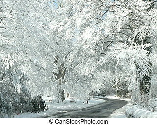 cape cod winter - road and snowy trees