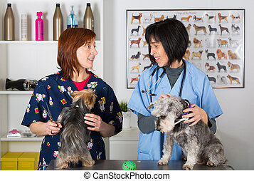 Veterinary clinic - Veterinary conducting a review two...