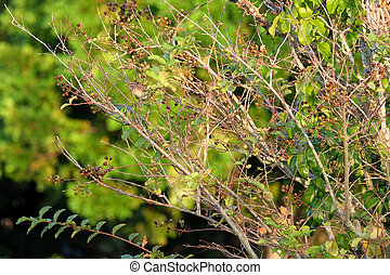 Migratory Palm Warber on Tree Branch - Migratory Palm Warber...