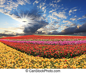 Flies over a field flock of cranes - The field of flowers...