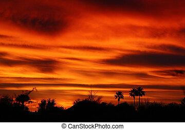 Desert sunset palms