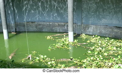 Crocodiles in aquarium. - Small crocodiles in an open air...