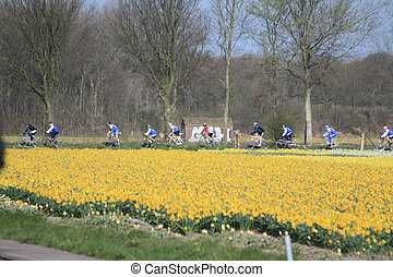 Cyclists in a field with daffodils
