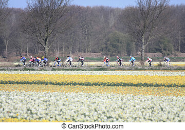 Cyclists in a field with daffodils - A group of cyclists in...