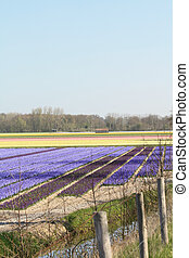 Dutch Floral industry - floral industry in the Netherlands:...