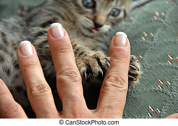 Claws and fingers - kitten claws grasping a female hand...